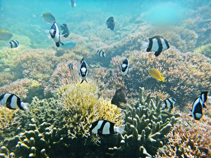 under-water-gili-sudak